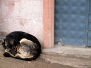 A stray dog huddles in the cold in Göreme