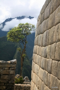 We took a lot of pictures of Machu Picchu's lone tree.