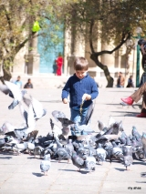 Feeding the pigeons in Plaza Murillo