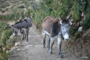 Donkeys on the trail leading to the ruin of Pilko Kaina
