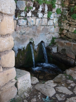 The island's natural springs-its so-called Fountain of Youth