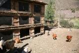 Farm tour at El Albergue