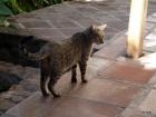 El Albergue gato